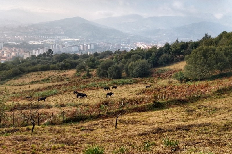 Approaching Bilbao - clean rural air replaced by not-so-pure haze of more developed countryside
