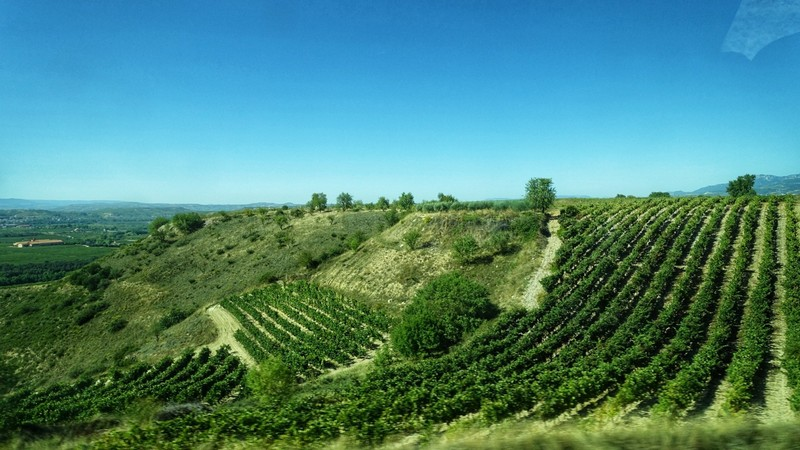Inhospitable looking terroir - still tons of Tempranllo growing on steep slopes - Rioja region