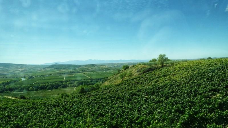 Miles and miles of vines - Rioja region