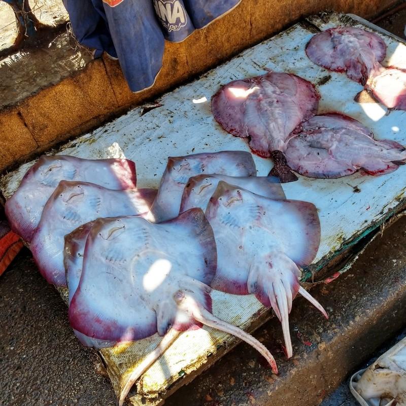 Fresh fish - Essaouira