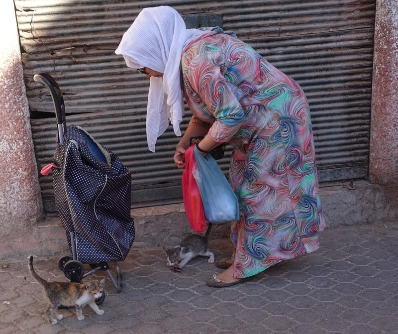 Cat lady - walks the streets in the morning to feed city cats (who keep the rat and mouse population under control)