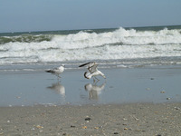 Our seagull friends.