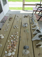 The sorting of the shells...