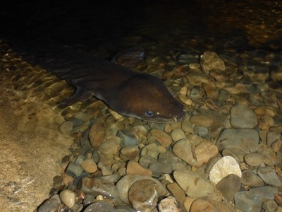 Friendly cave eel