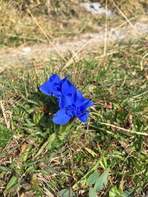 Late blooming alpine flowers