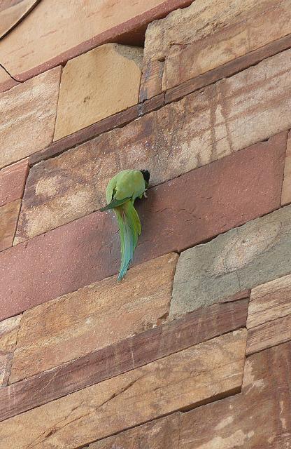 Parakeets (I think)