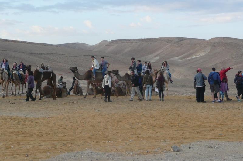 Evening Camel Ride