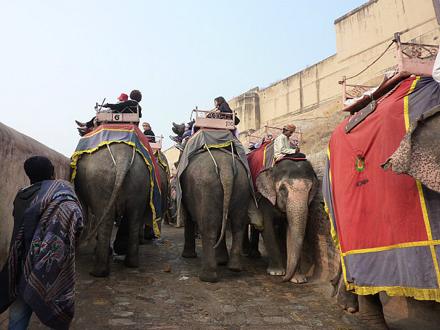 Elephant rides up to the fort