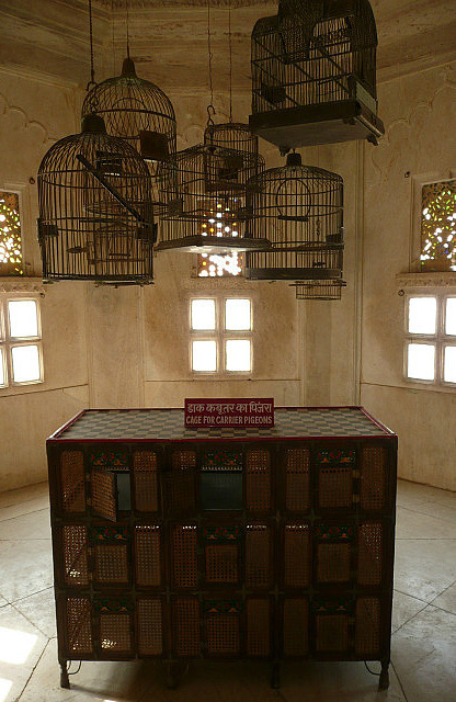 Carrier pigeon cages