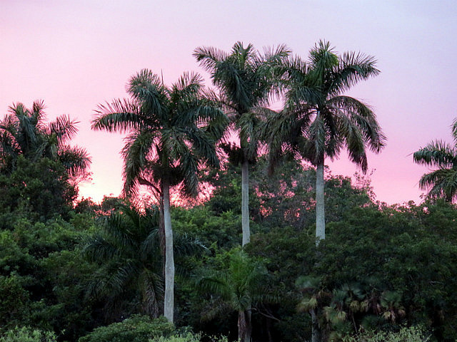 Last Sunset at Royal Palm