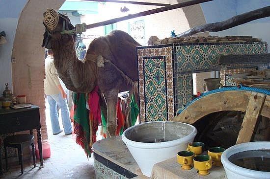 Camel Runs Well