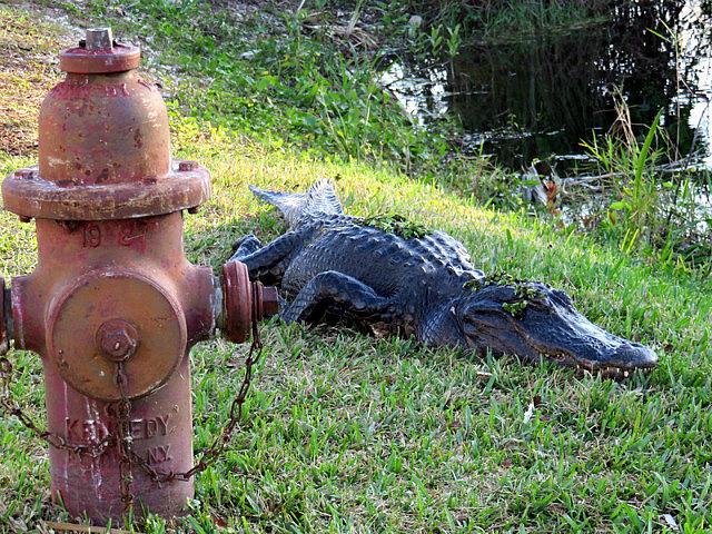 Camaflouged Gator