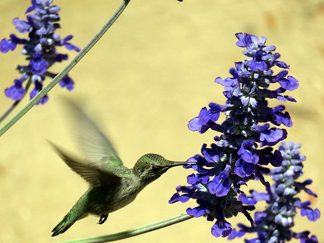 In the Hummingbird Garden