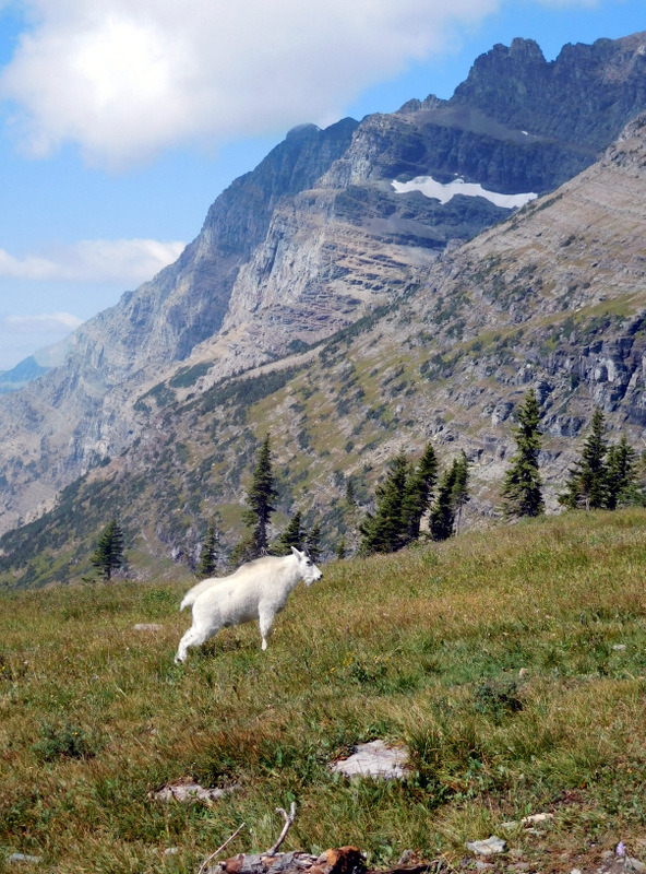Moutain Goat Poses