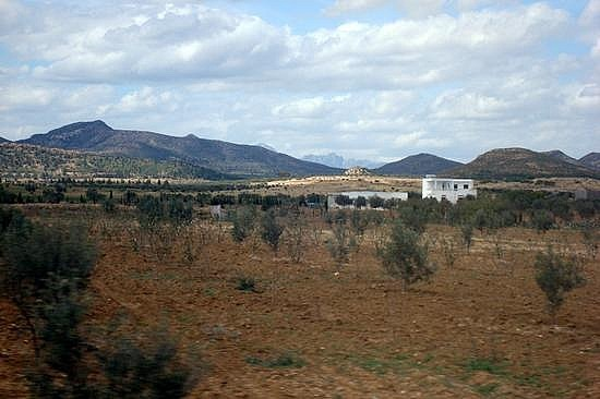 Private Home and Olive Trees