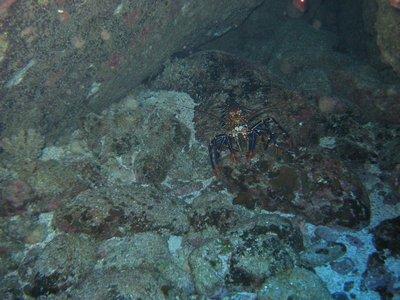 041617112554 lobster Diving Easter Island