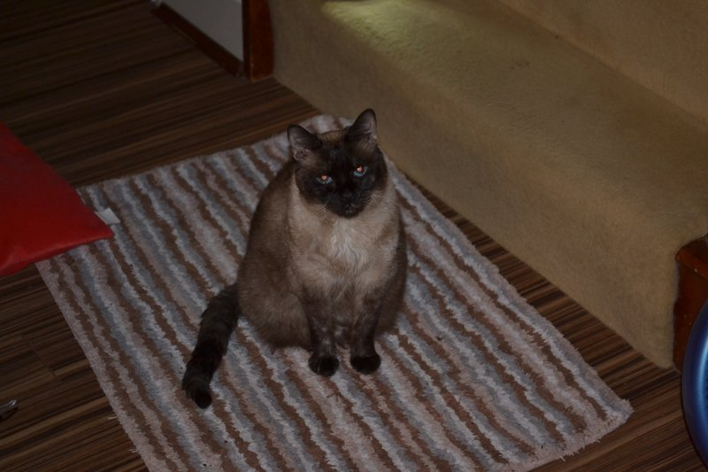 carpe feline