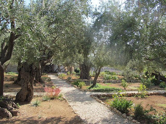 Garden of Gethsemani