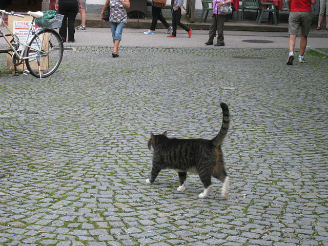 Disdainful kitty