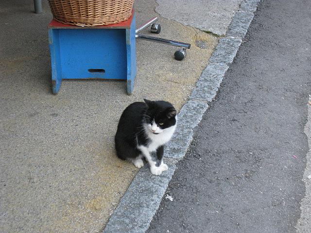 Dissatisfied kitty