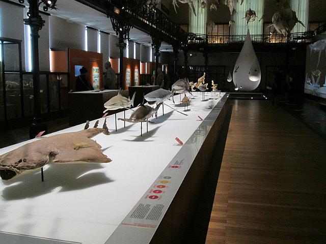 Sharks in the Oceanographic Museum