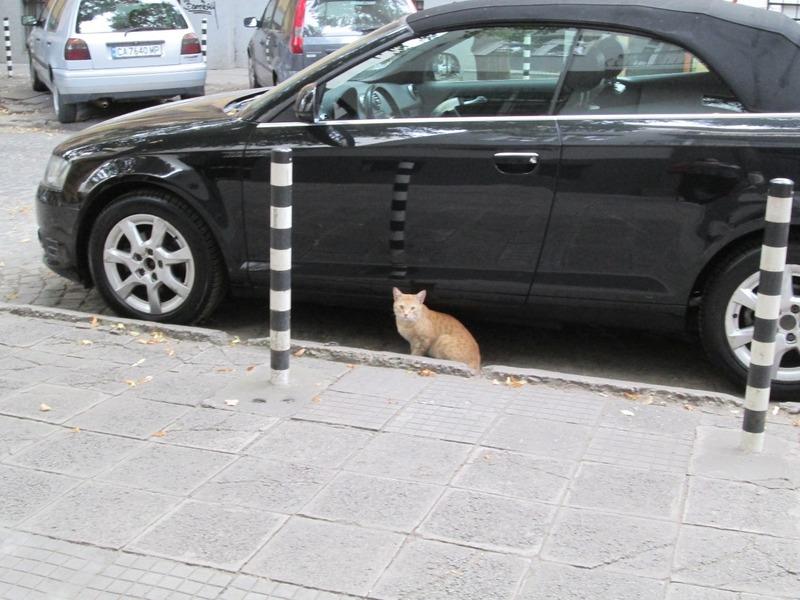 Bulgarian kitty!