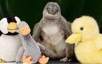 animals-penguin_3386907k.jpg
