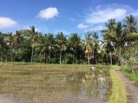 Conference Hall in the Rice Paddies