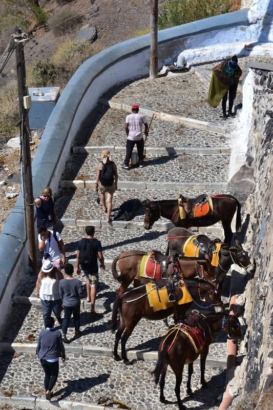 The Donkeys of Fira