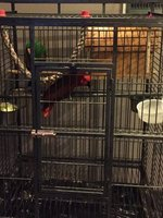 Parrots in a Cage at Reception in Qax Hotel