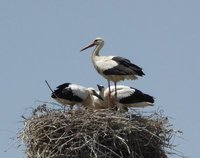We Love Stork Watching