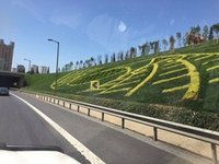 Manicured Motorway Flowerbeds - Miles & Miles of Them