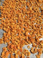 Apricots Drying in Sun