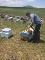 Bee Keeper Opens Up Hive to Show Us - No Protective Clothing