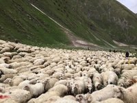 Sheep Jam  / Beware