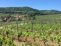 Some of our favourite scenery - Vineyards