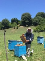 Checking For Honey - Just Over Azeri Border