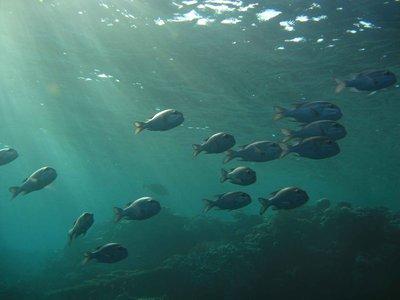 CAIRO02_fish-school