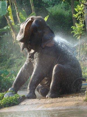 Elephant-Sitting.jpg
