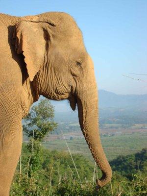 Elephant-morning-view.jpg
