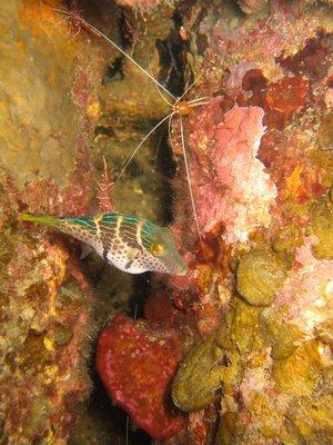 GD_Shrimp-and-boxfish