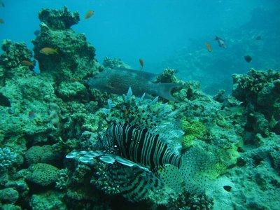 REDSEA_lio..grouper.jpg