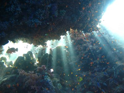 REDSEA_sunlight-fish.jpg