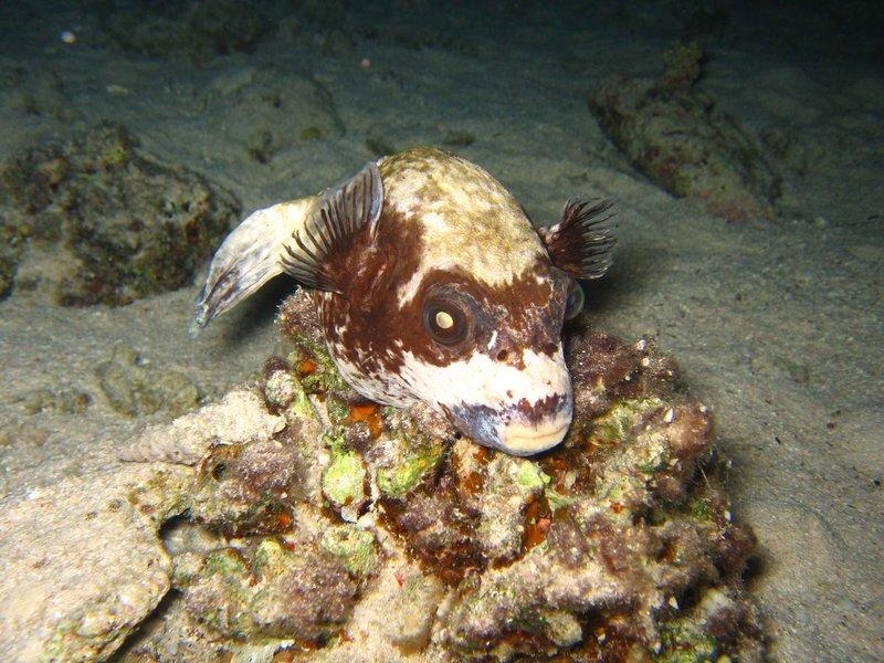 CAIRO02_spooky-fish