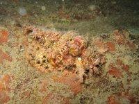 GD_Scorpionfish.jpg
