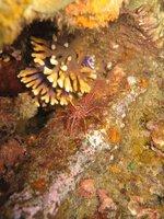 GD_shrimp.jpg