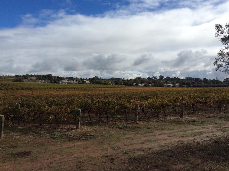 angaston across the vineyards