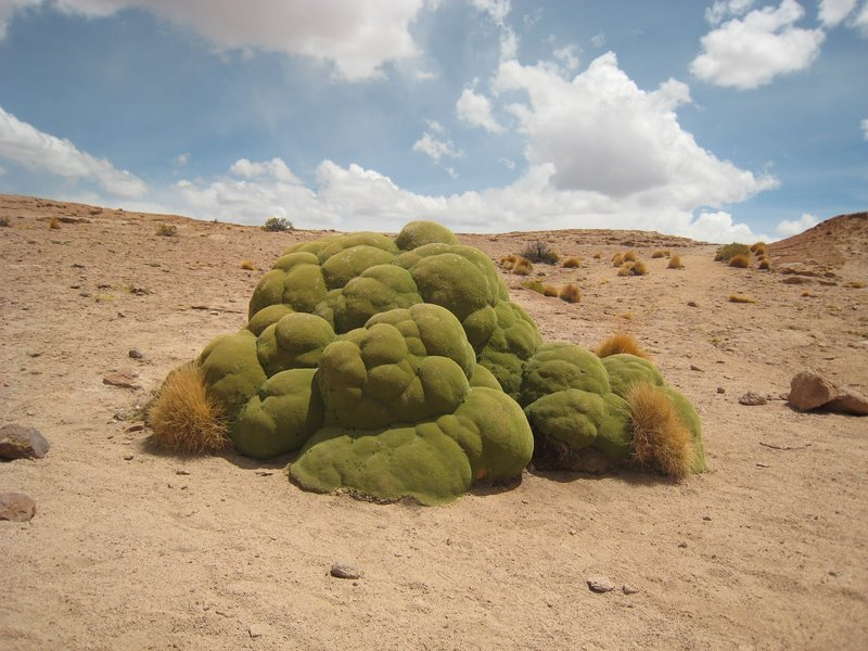 Bol Desert Thing