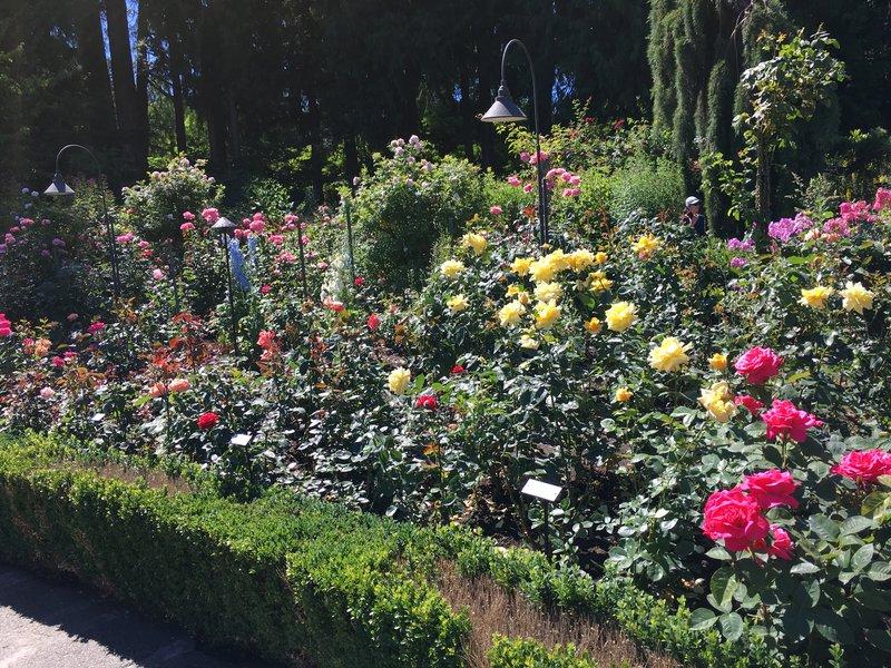Rose Garden - Butchart Gardens