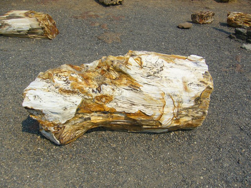 Ginkgo Petrified Forest State Park